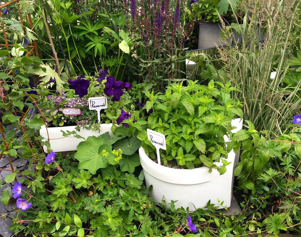 herbs in porcelain