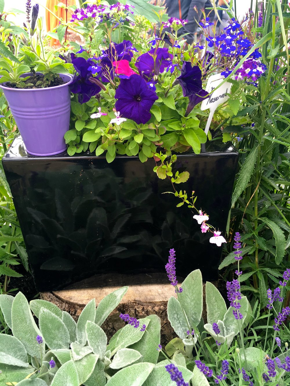 SAGE REFLECTING IN THE GLOSSY BLACK CONTAINER