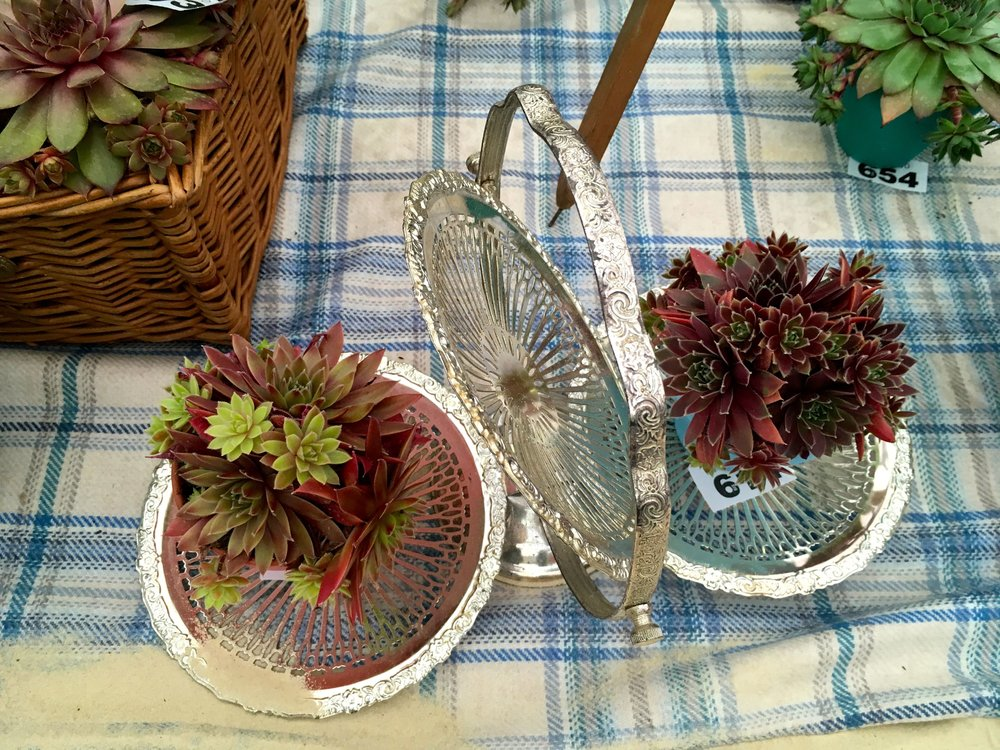 succulents on a silver platter