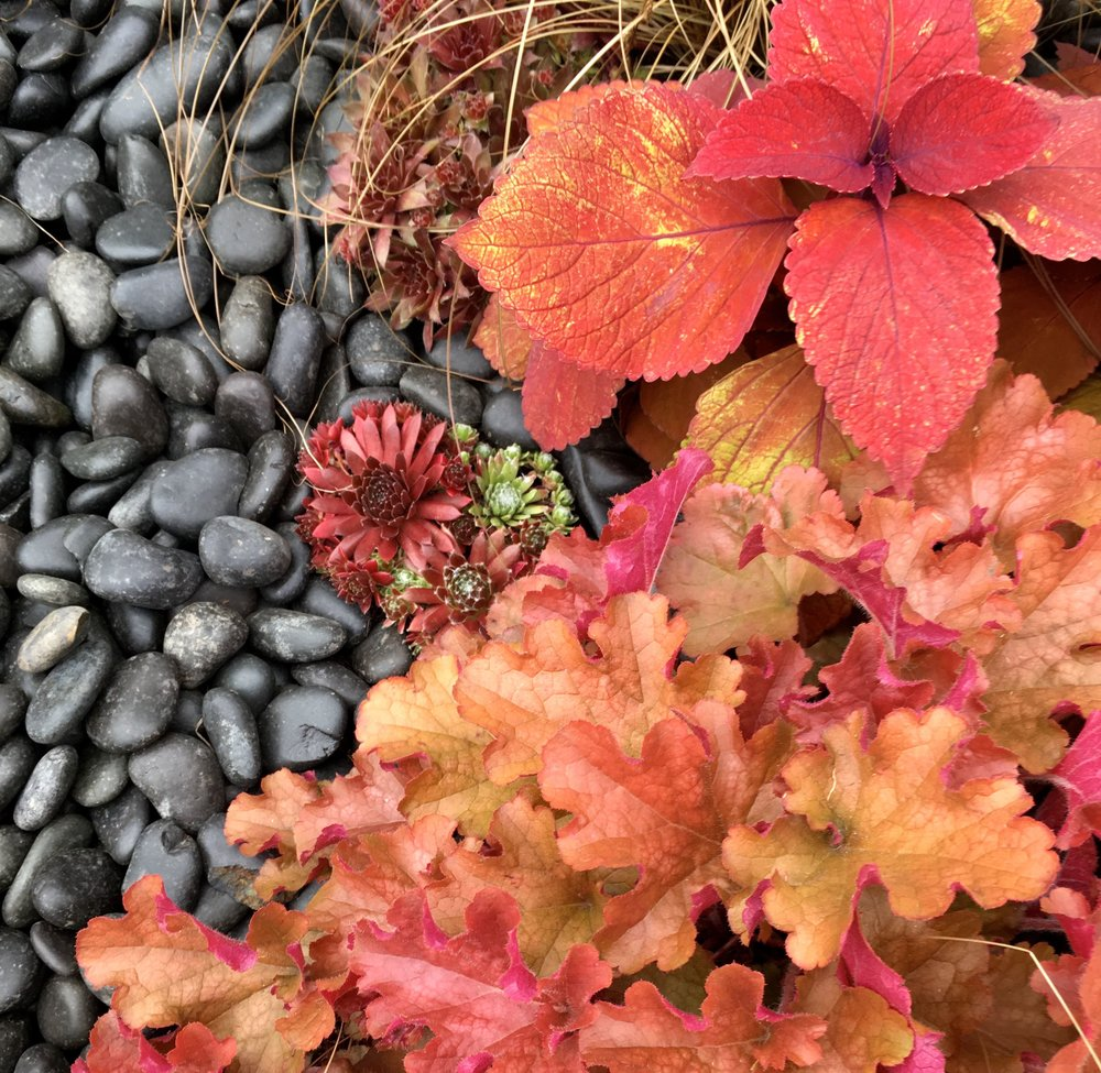 striking reds of the plants against the grey pebbles