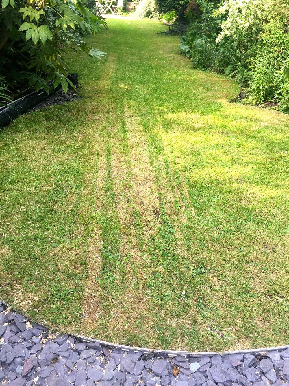 stripes on the grass circles