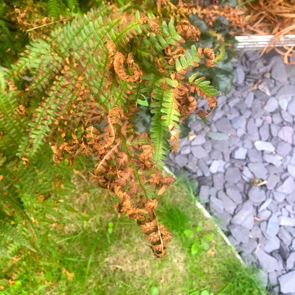ferns and slate