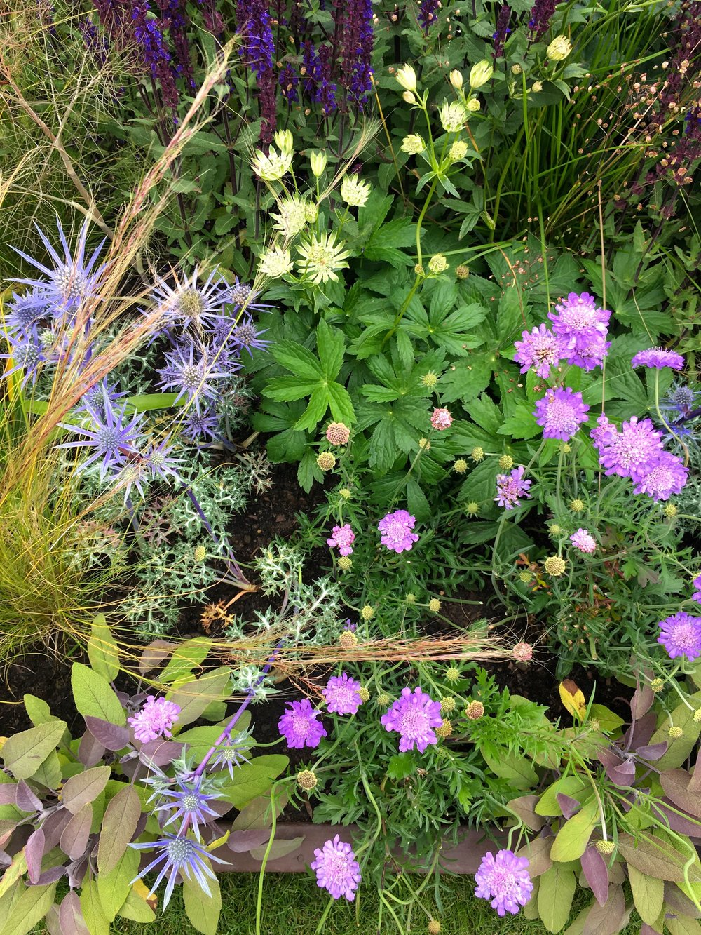 fresh and pretty planting worthy of a mermaid at Gardeners' World Live