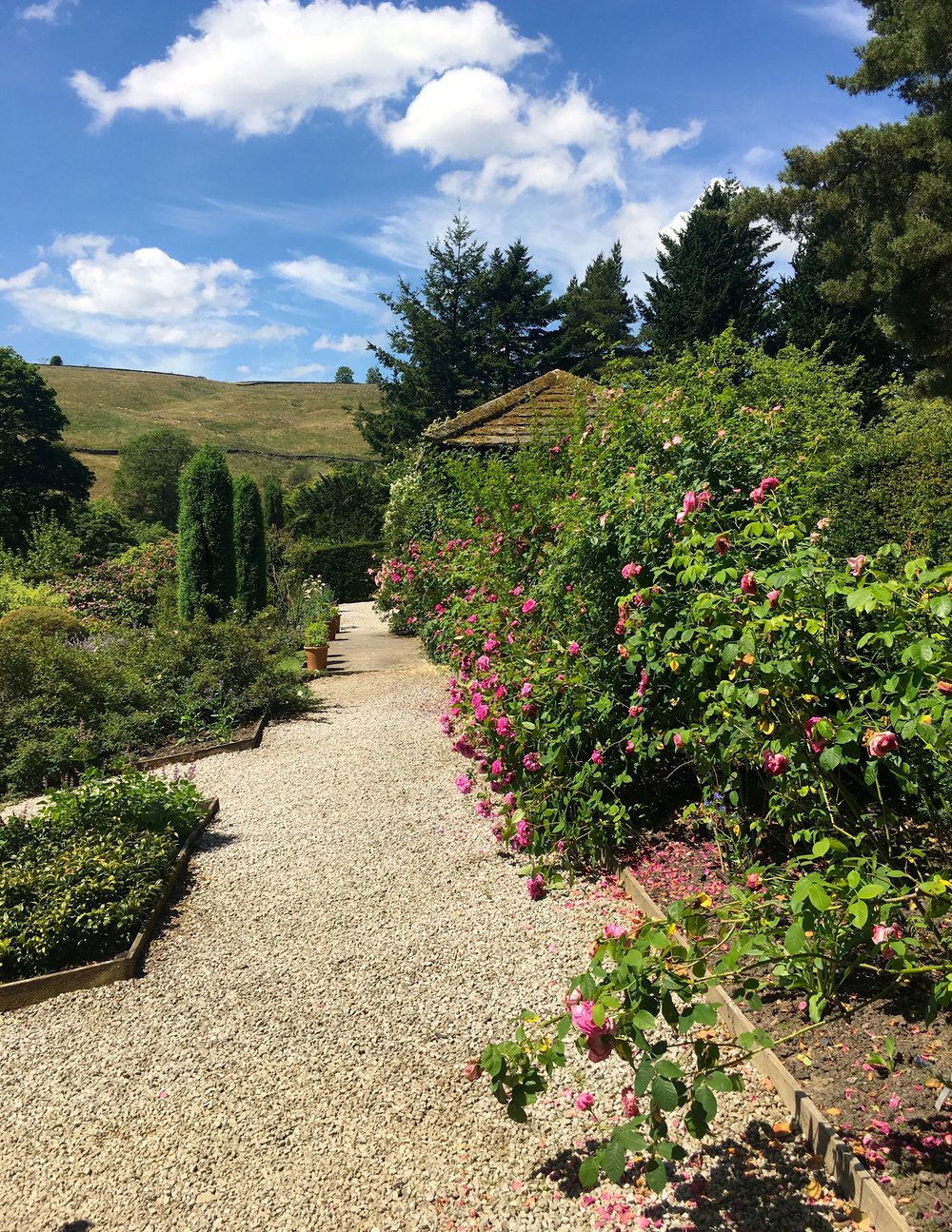 A gravel path filled with scent and blue skies at Parcevall Hall in Yorkshire