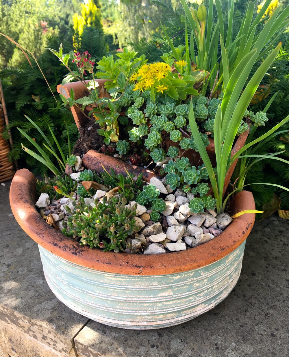 ceramic pots and a mini garden of plants at RHS Harlow Carr