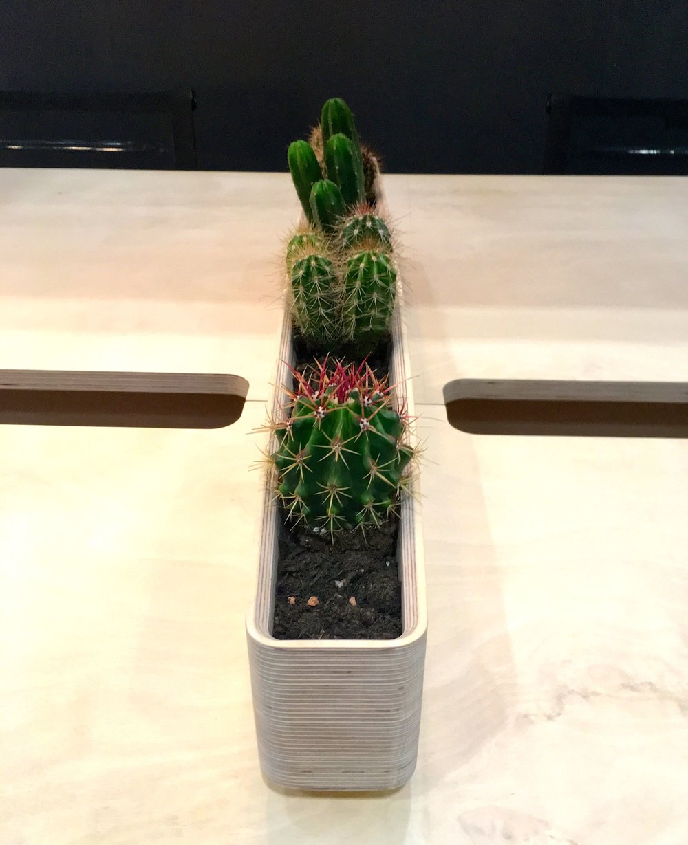 x-ply desks adorned with succulents