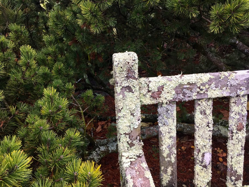The lichen bench at RHS Rosemoor