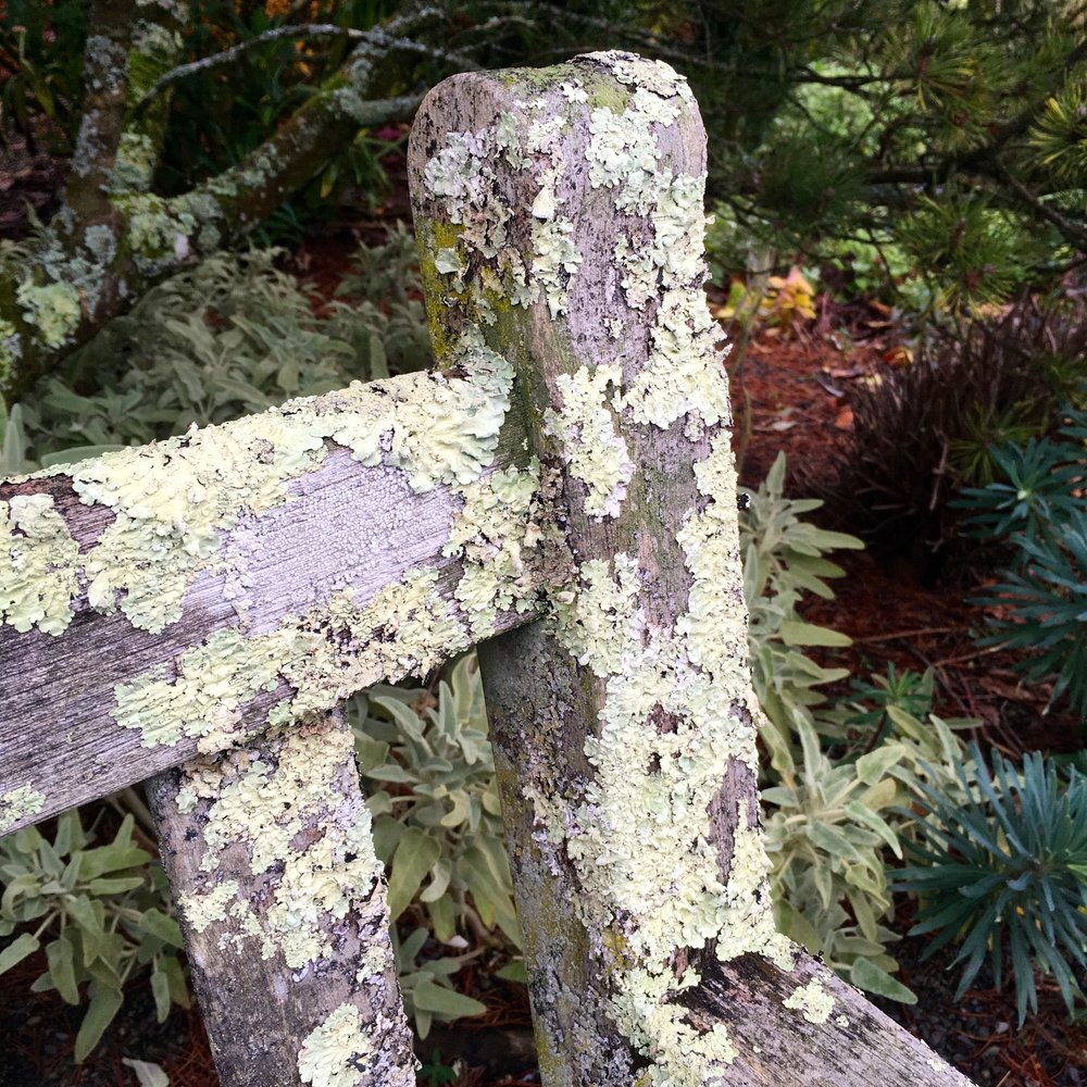 More than liking the lichen on this bench at RHS Rosemoor