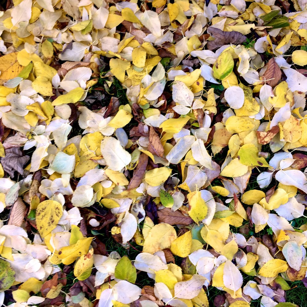 the grass in our garden is covered with leaves