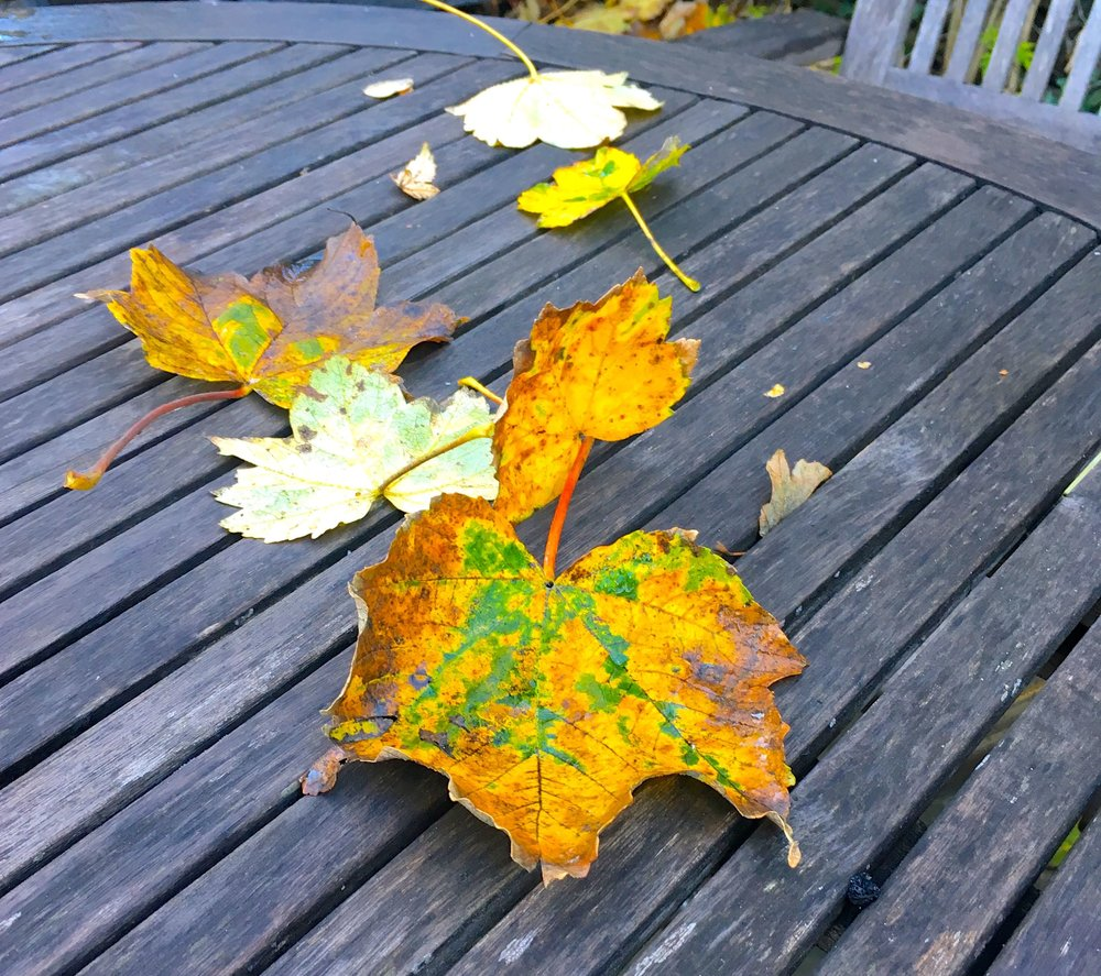 Leaves on a wet garden table