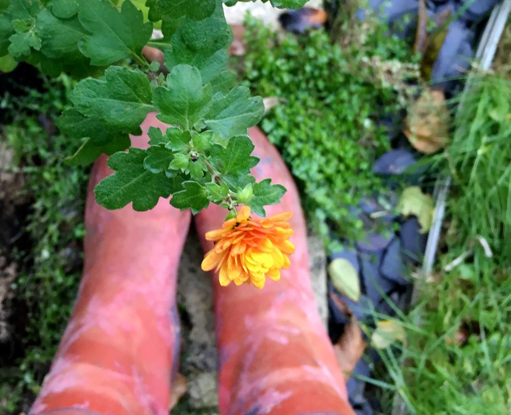 chrysants, slate and wellies