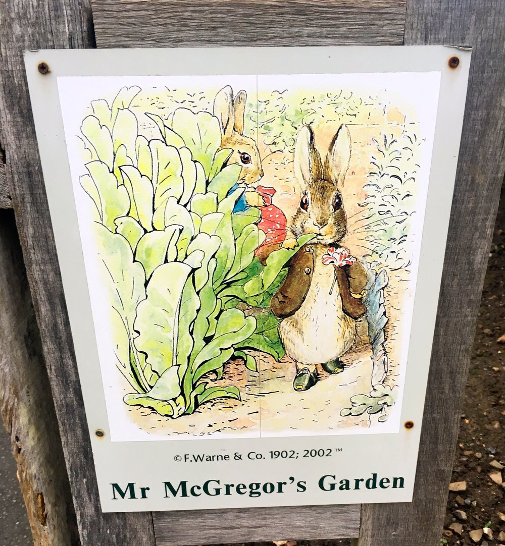 Mr McGregor's garden