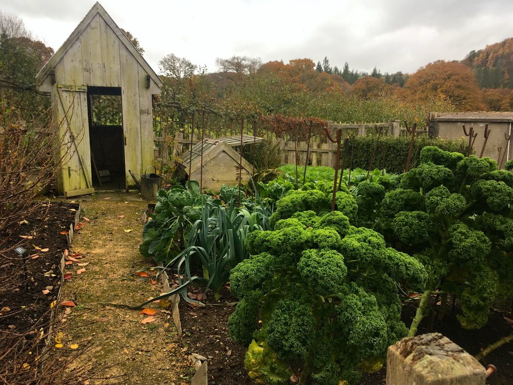 Looking down the garden path at the shed and vegetables