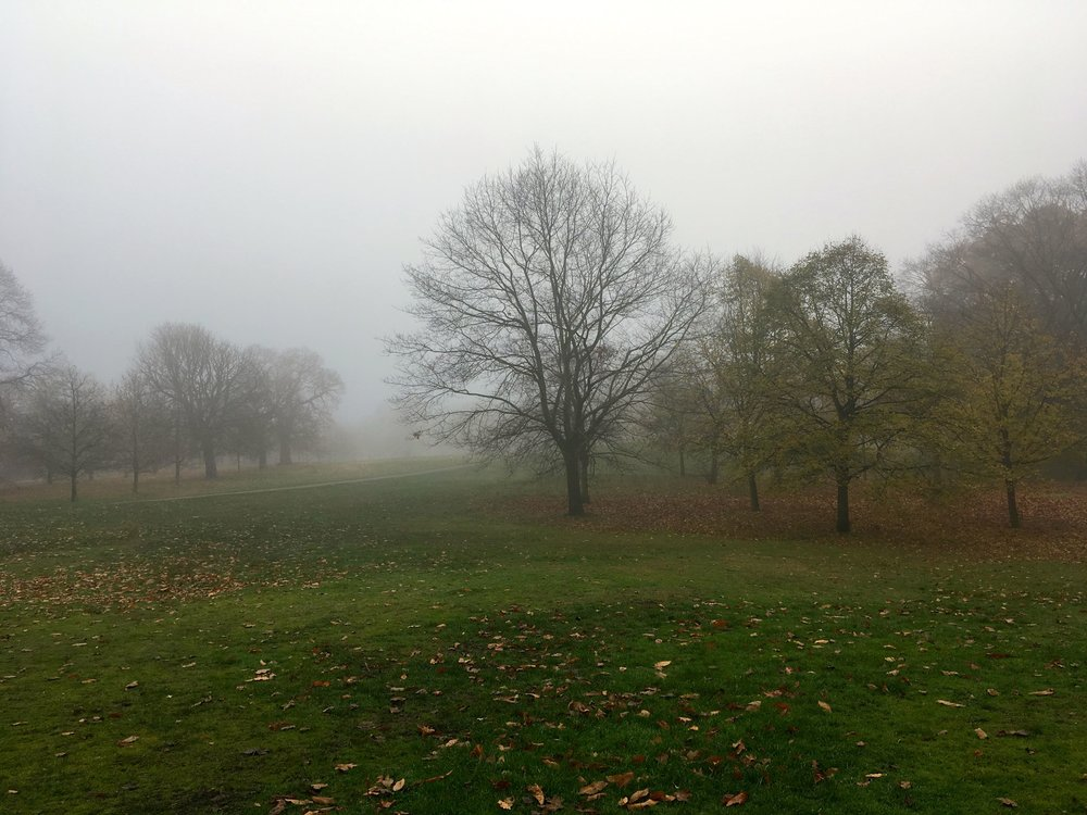 A view across a tranquil Greenwich Park in Fog