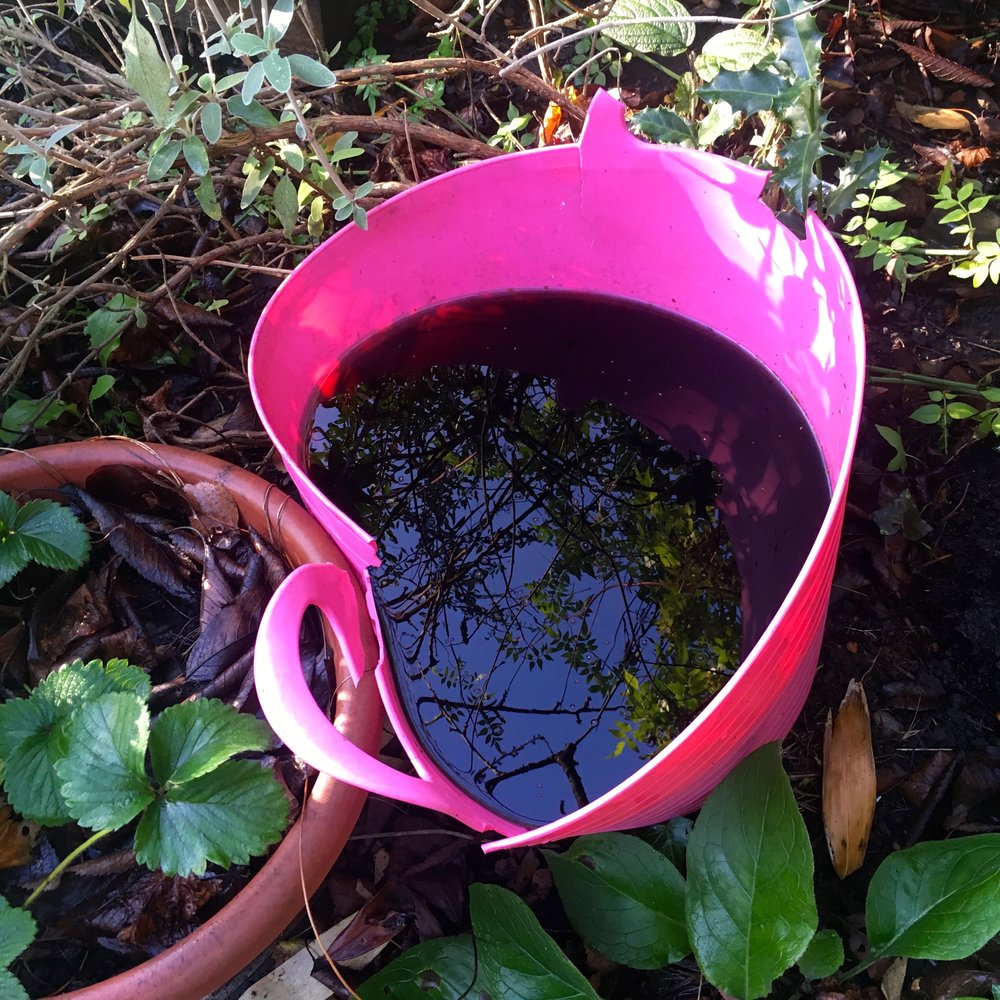 gathering rainwater - and reflections - in the broken trug