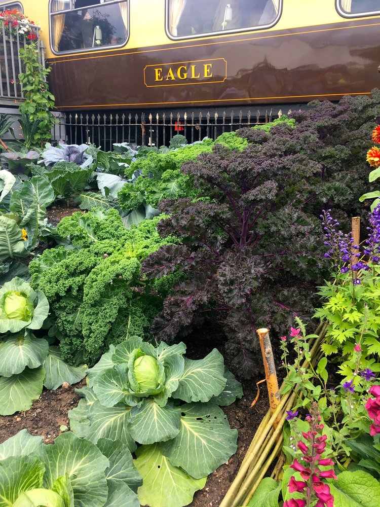 JUNE:  HIGHLIGHTS FROM A DAY AT GARDENERS' WORLD LIVE