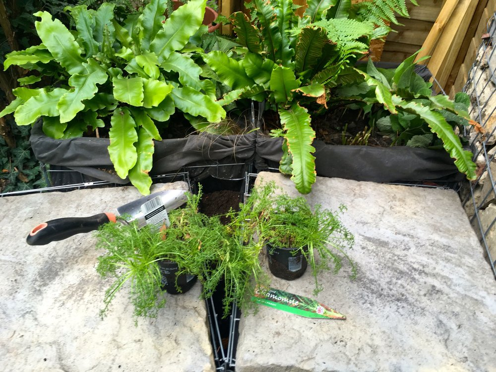 SEPTEMBER:  FINDING TIME FOR SOME TRIANGULAR PLANTING