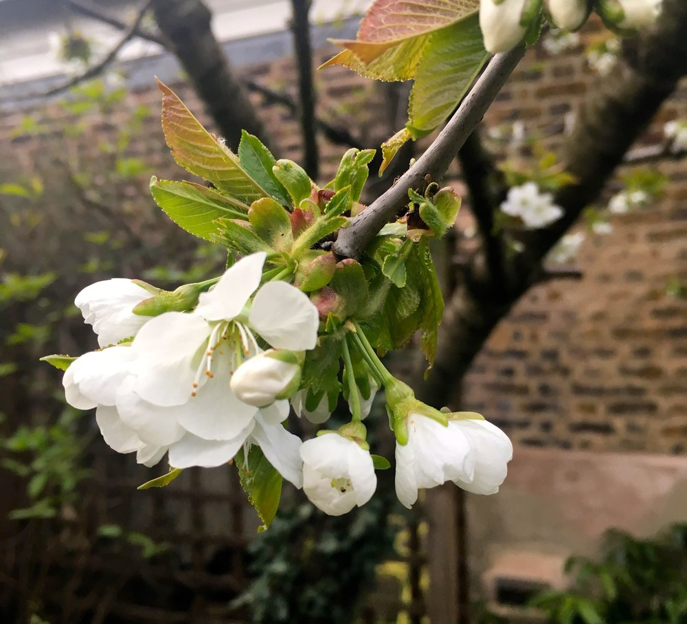 APRIL:  IN MY GARDEN - A FIRST PROPER LOOK AFTER WINTER