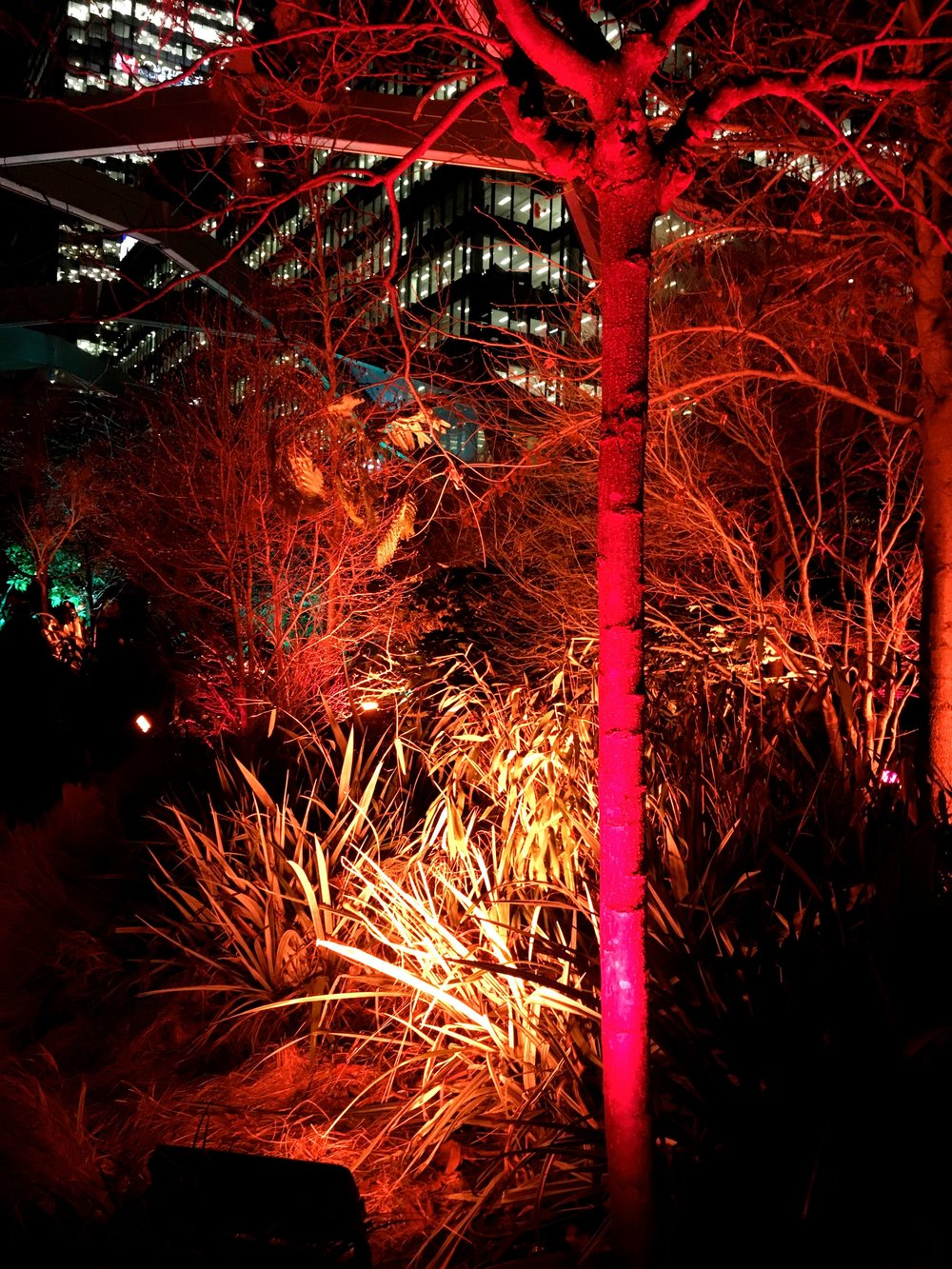 red and orange illuminated trees in the Crossrail Place roof garden in Canary Wharf