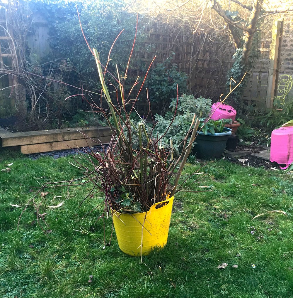 some light gardening - the first of the year
