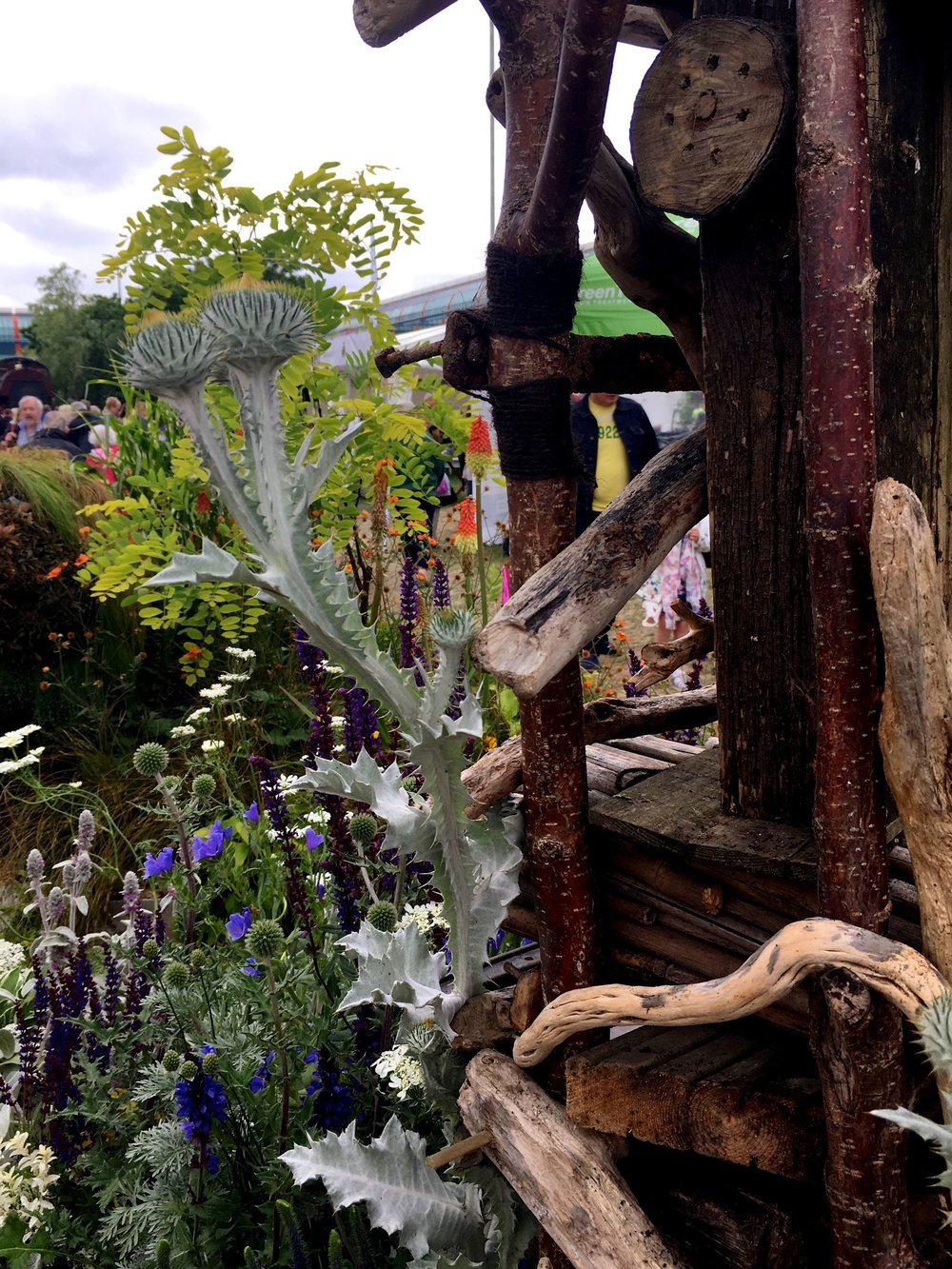 Driftwood and thistles