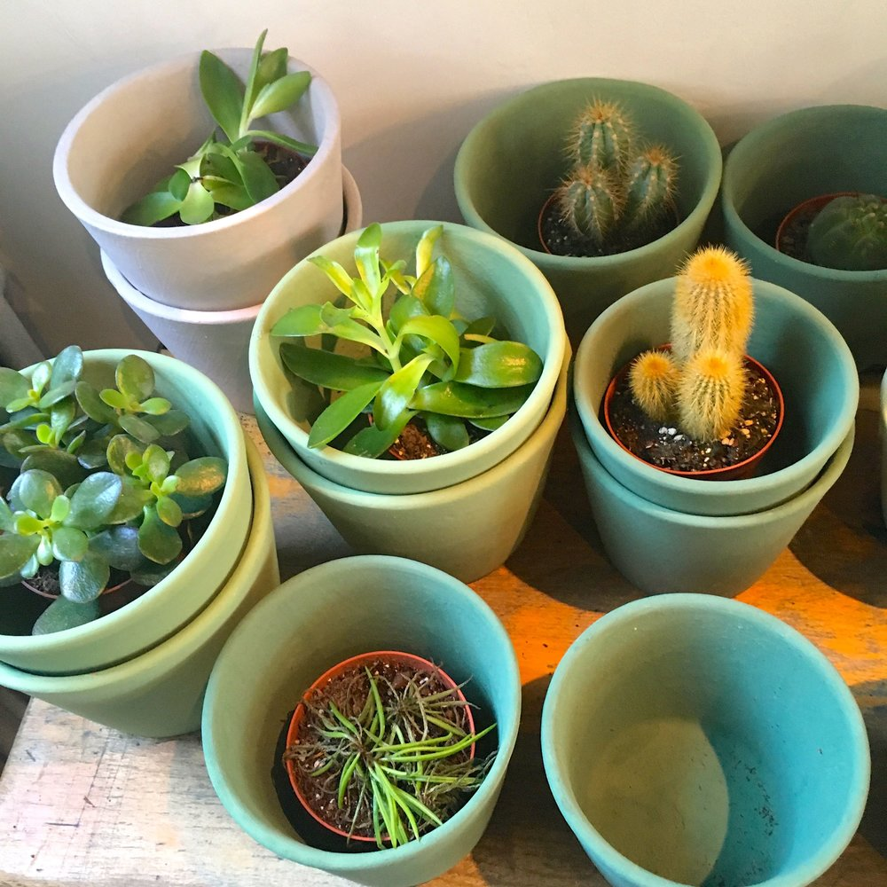 Green pots and plants