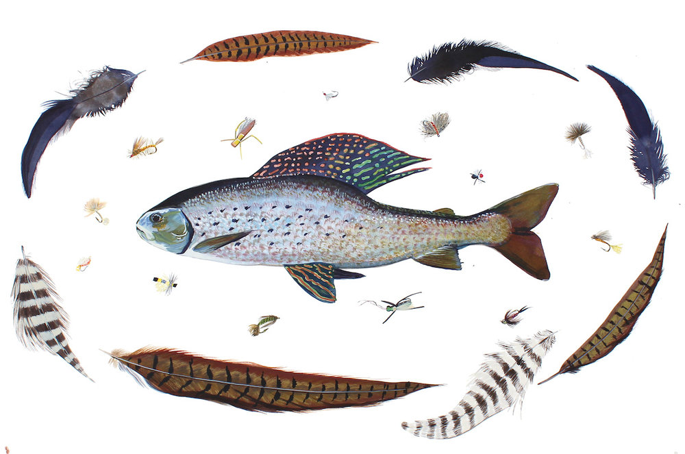 Arctic Grayling, Odell Creek, Montana 18x24 inches, acrylic ink on paper, 2015