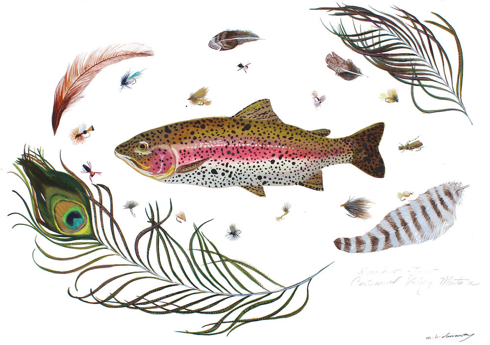 Rainbow Trout, Madison River, Montana 18x24 inches, acrylic ink on paper, 2015