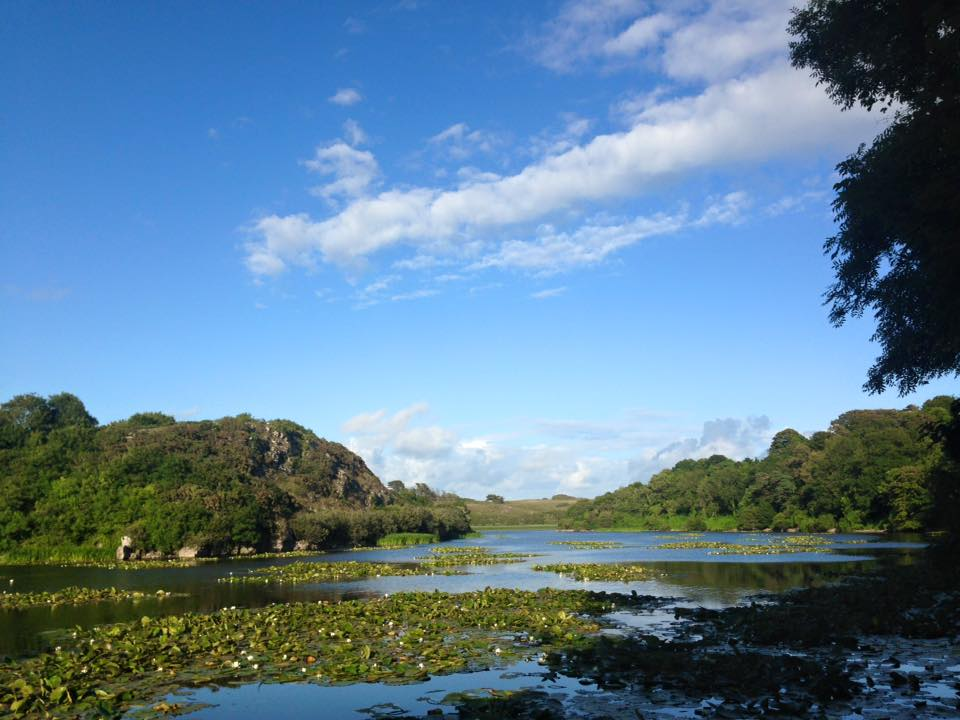 15. Lily Ponds, Pembrokeshire.jpg