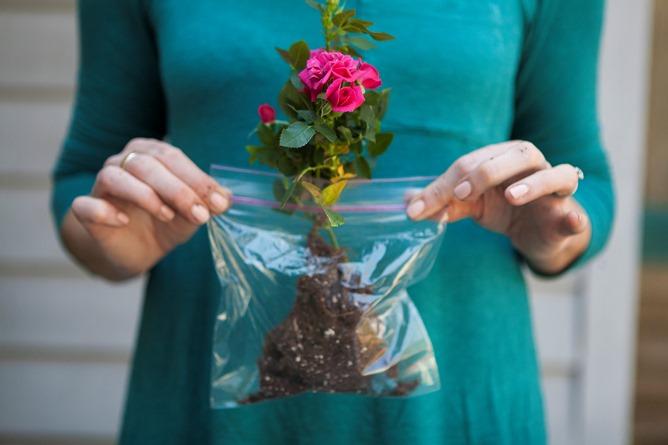 simple tip for your floral arrangement