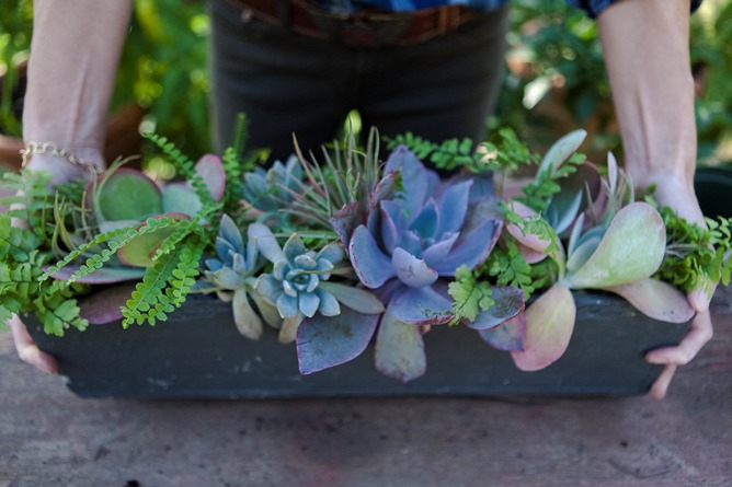 fall succulent floral arrangement