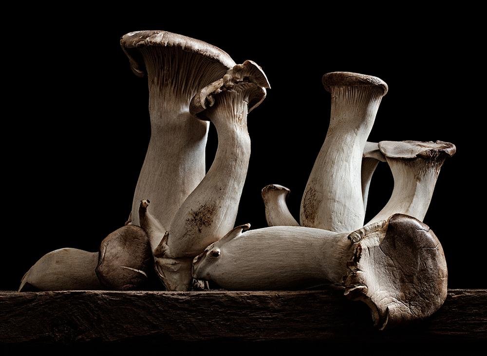 Mushroom-29_FINAL.jpg