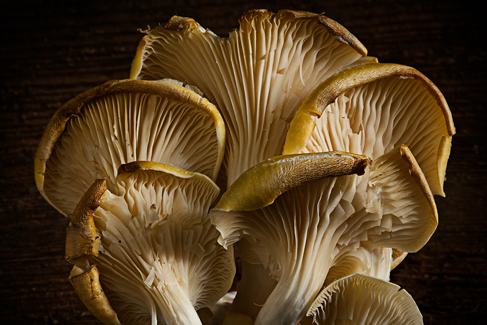 Mushroom-72.jpg