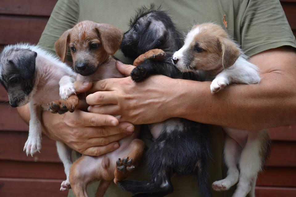 Dog and cat charity on Koh Samui.jpg