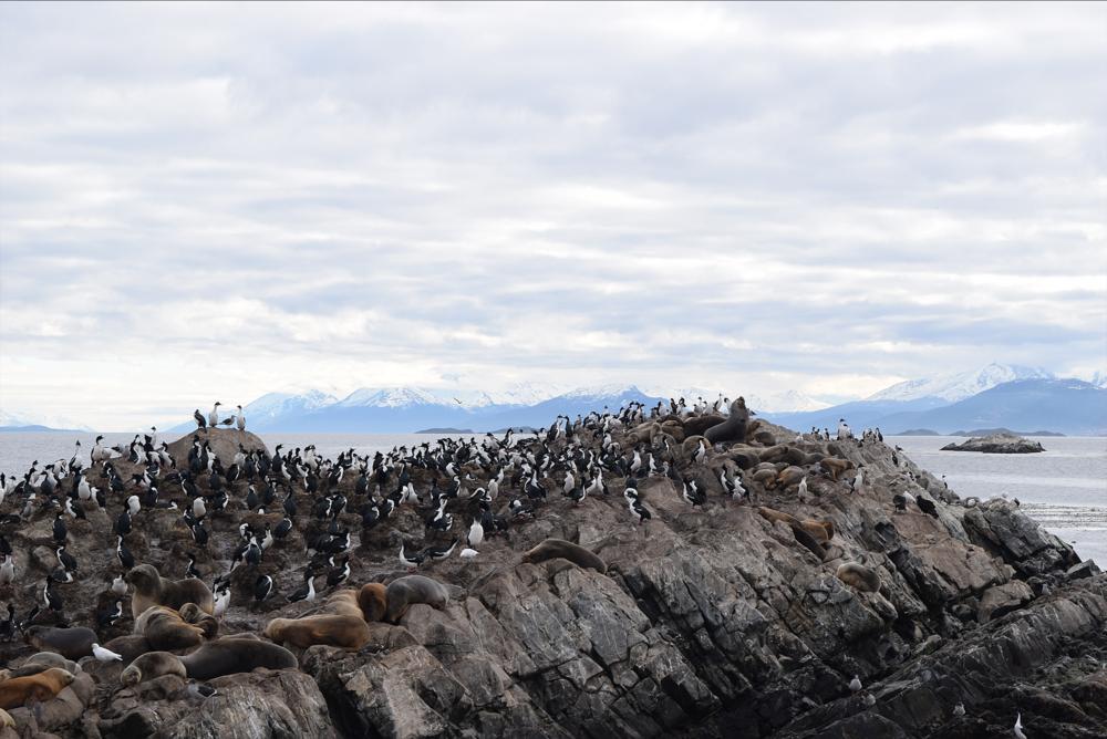 Leones marinos y aves que parecen pingüinos, pero no lo son.
