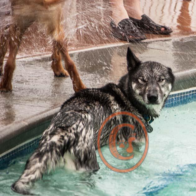 Dogswim_P101 copy.jpg