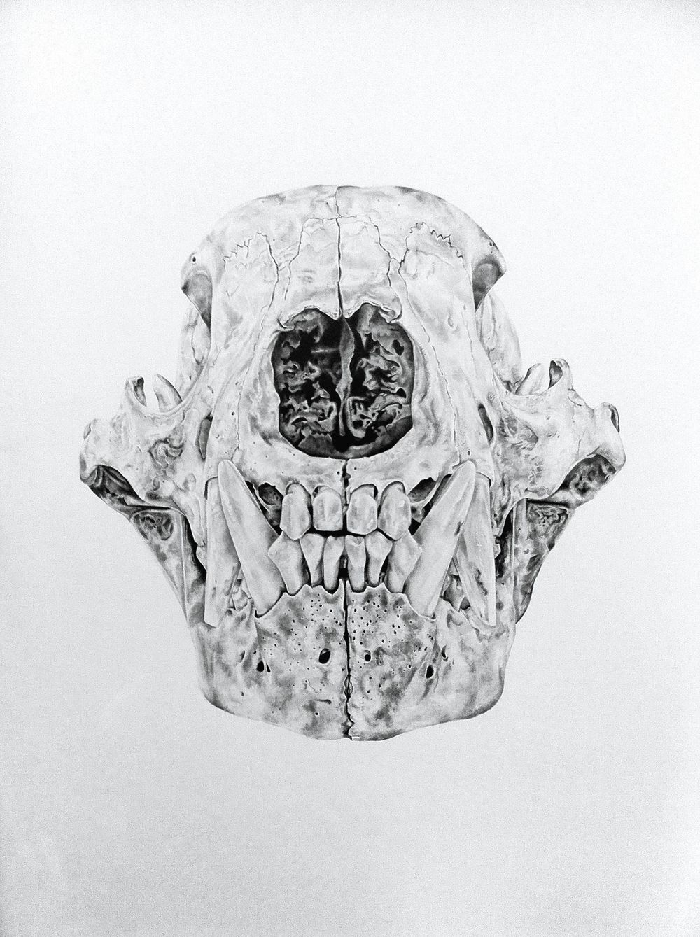 Robyn DuTemple. Bear-skull, All Are Contained In Void. 2014