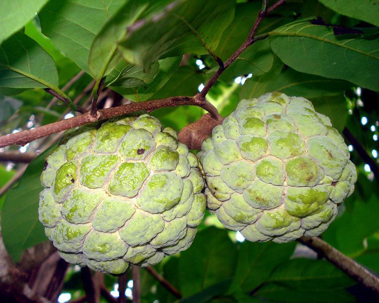 Anona_squamosa_fruit.JPG
