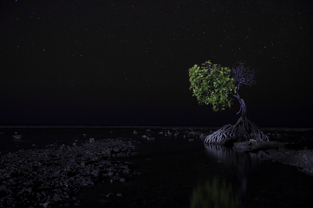 Imagine yourself a solitary mangrove tree a few feet from the shore line, a slowly incoming tide, a clear nightsky with thousands of stars and a building site behind you with a security light aimed straight at your tree. This was the setting for this picture I took somewhere on the northern coast of Bali. The tree for me symbolizes the struggle that nature has against the encroaching species called humans. Even here on Bali. The fact that only half of the tree has leaves is quite ominous... I imagine that this part of the coast was previously an extensive mangrove forest. Now all is cleared, the beaches and the coral reefs a little further away are used by tourists and the land directly next to the beach is being steadily filled by extensive hotels. The building site behind me, admittedly convenient for this picture, is a next slice of the cake that is being cut off from the original cake called nature.   A long exposure.