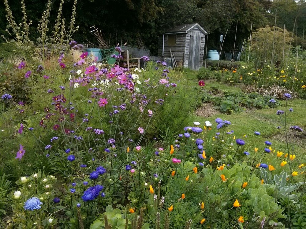 I'll post some painting updates soon but in the meantime here is a photo of flowers on the allotment today.