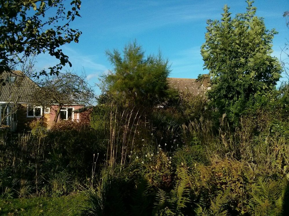 A beautiful warm autumn afternoon in the garden; too nice to do any work!
