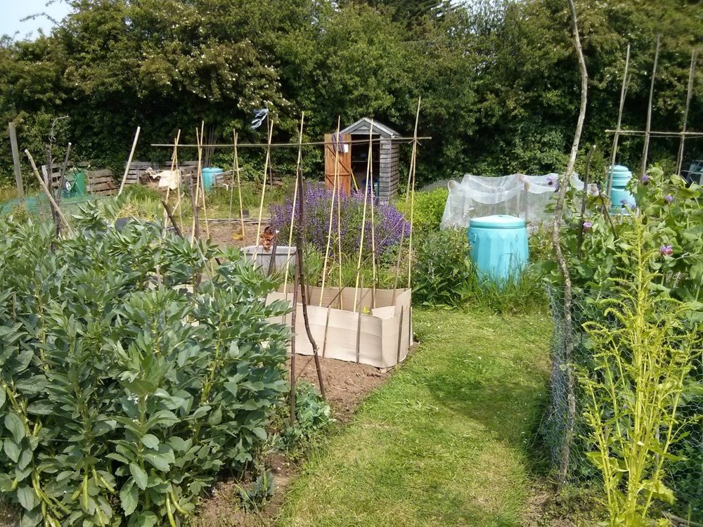 Bank Holiday Monday morning on the allotment, planting squashes and beans and cutting the grass; then off to the studio.