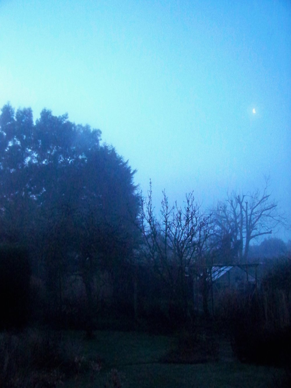 The moon up over the garden early this morning; looking like another mild and damp day.
