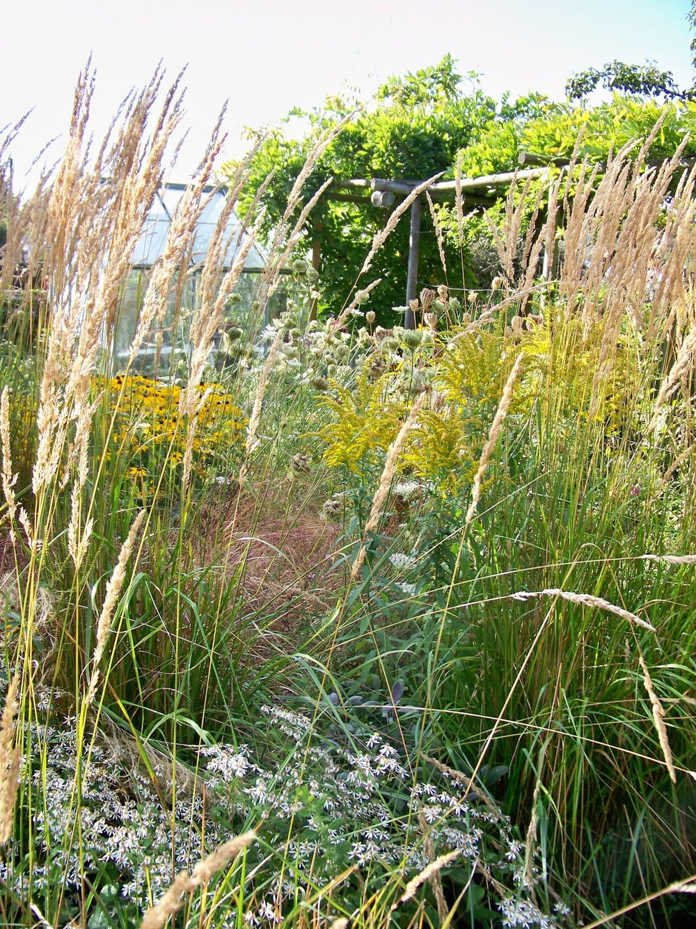 5th September 2012. In the garden this afternoon.