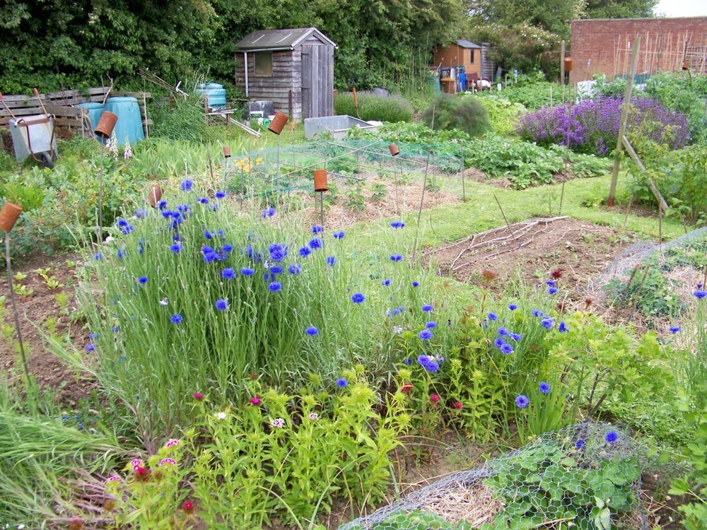 5th June 2012. Finished building the fruit cages on the allotment; just need a little sun to start ripening the strawberries now.