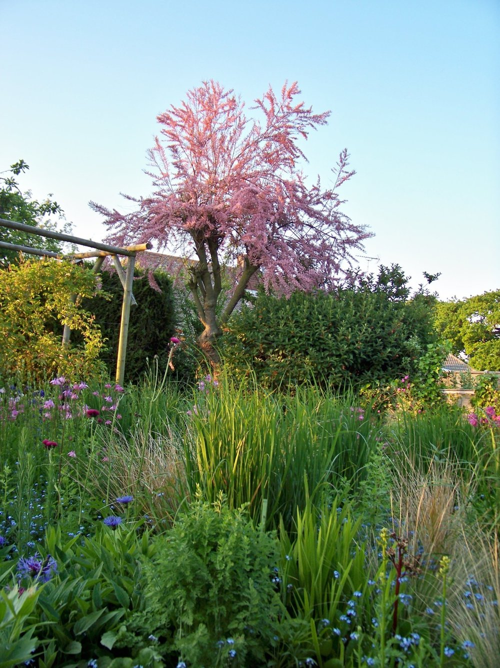 27th May 2012. Working in the garden on Sunday evening; sun going down at the end of a weekend of perfect weather.