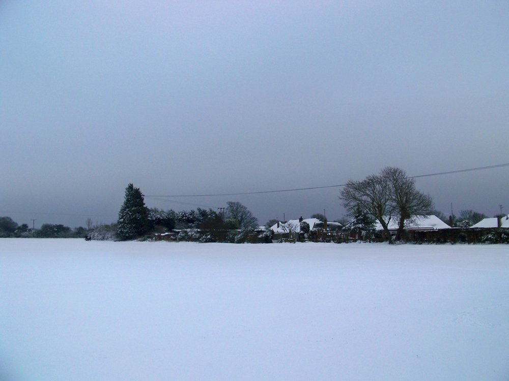 5th February 2012. Walking on the fields behind the house this afternoon.