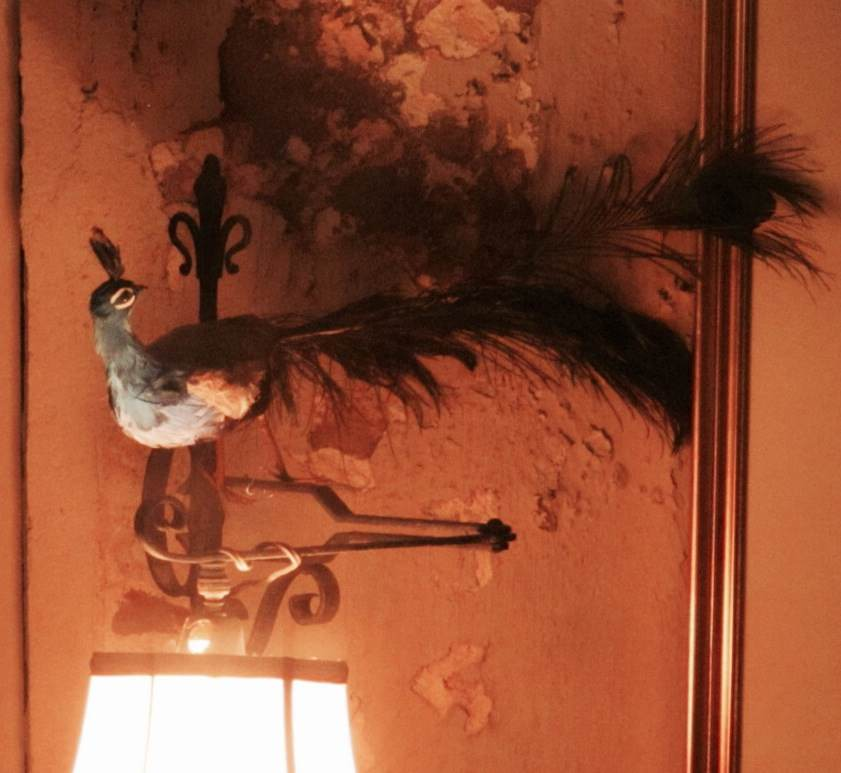 Peacock and Lamp