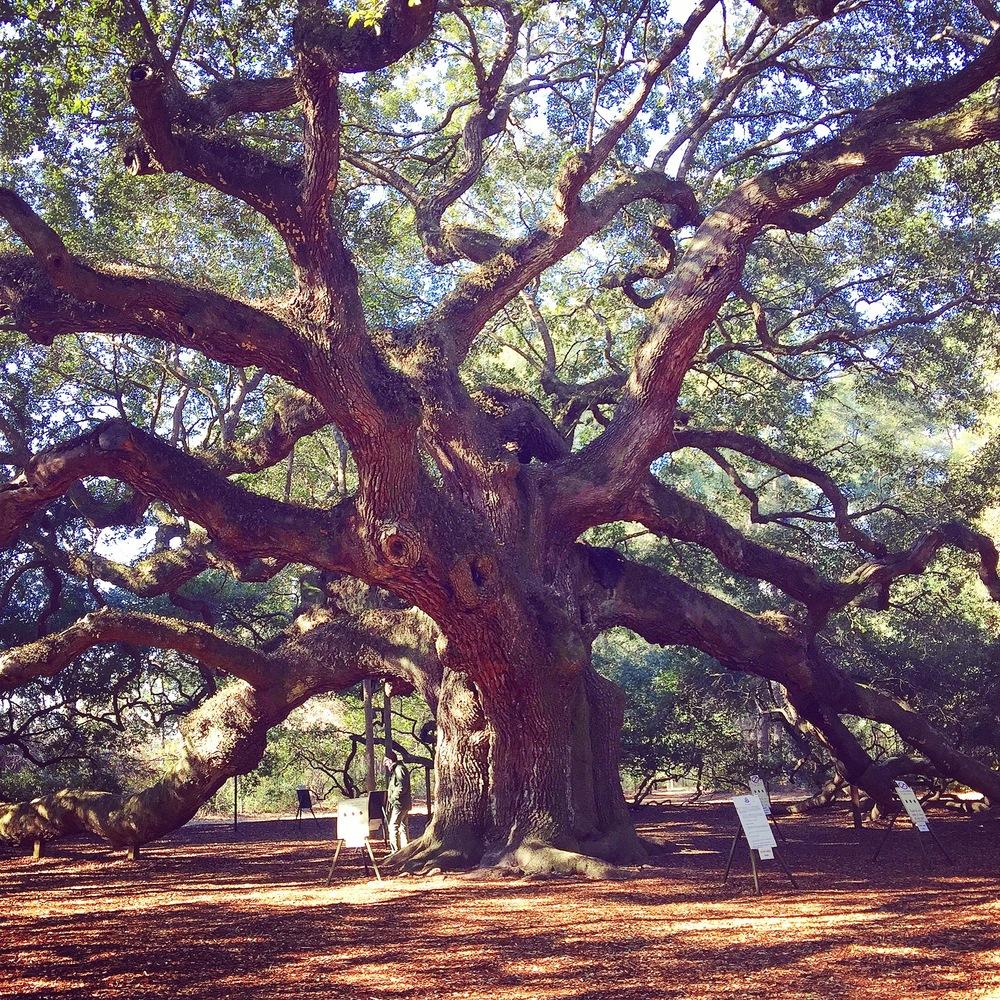 Angel Oak, Johns Island, Charleston SC