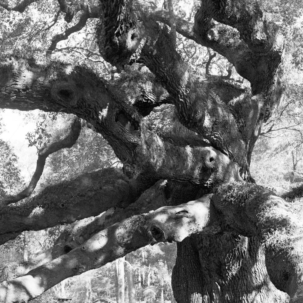 03-04-15-Hass-CharlestonF.jpg